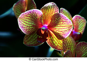 orchidee, kaleidoscope