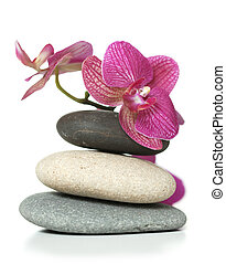 orchidee, liegende , auf, steine