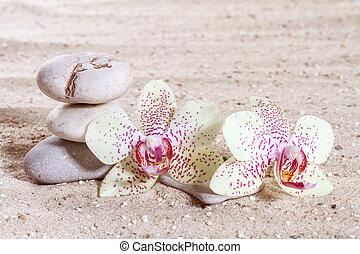 orchidee, met, zen, stenen, in het zand