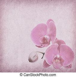 orchidee, ontwerp, in, grunge, en, retro stijl
