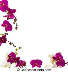 orchidee, umrandungen
