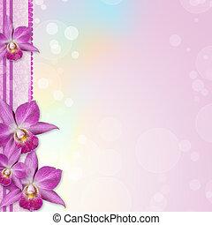 orchidee, umrandungen, schöne