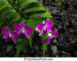 Orchids 1 - Taken on the big island of Hawaii