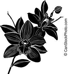 orchids, bloemen, vrijstaand, informatietechnologie