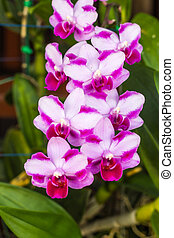Orchids bloom in the garden