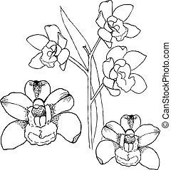 Orchids by hand drawing. Liner vector illustration on white