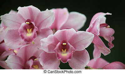 close up view of deep pink orchids