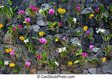 Orchids - Colorful potted orchids against the stone wall