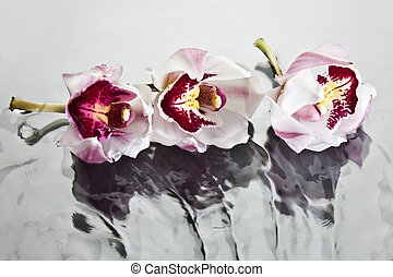 Orchids floating on water