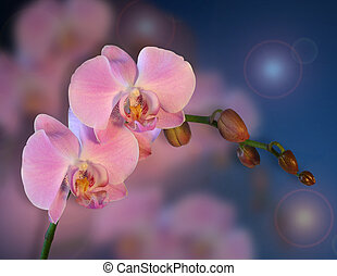 Orchids Floral background