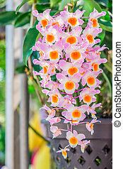 Orchids in hanging pots.