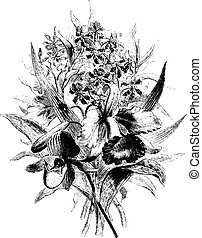 Orchids in the province of Antioquia, vintage engraving.