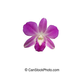 Orchids on isolated white background