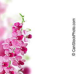 Orchids on white background