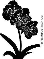 orchids. orchid flower branch vector isolated