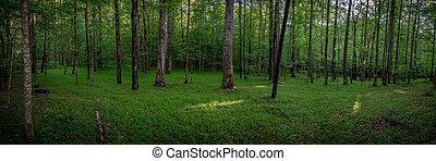 ordenado, piso, bosque