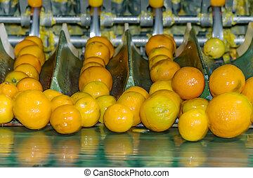 ordenando, processo, fábrica conservas, ou, fruta, tecnológico, laranja, automático, plant.