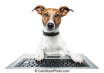 ordinateur pc, chien, tablette