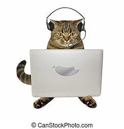 ordinateur portable, écouteurs, chat