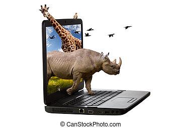 ordinateur portable, dehors, animaux, écran, venir