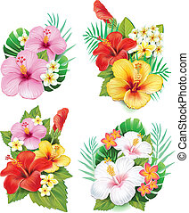 ordning, af, hibiscus, blomster