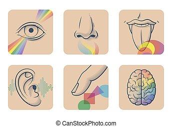 orecchio, odore, set, touch., images:, sei, sapore, udienza, cervello, senses:, vista, cinque, dito, naso umano, anatomico, occhio, lingua