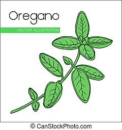 oregano  fill