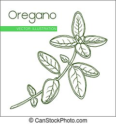 oregano  green