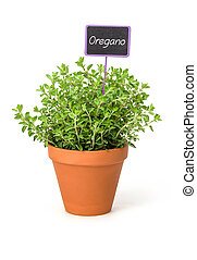 Oregano in a clay pot with a wooden label