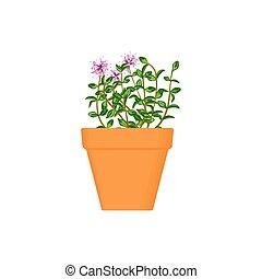 oregano vector culinary herbs in terracotta pot - oregano...