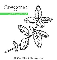 oregano  white