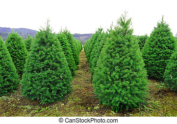 oregon, árvore natal, fazenda