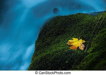 Oregon Cascade Background Watson Creek Oregon - Oregon...