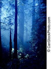oregon, erdő