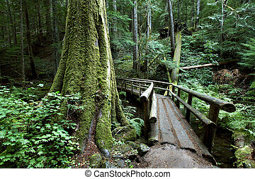 Hikers bridge along the McKenzie river trail in the Oregon cascades.