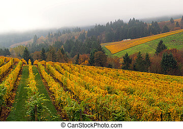 Oregon Vineyard in Fall Season