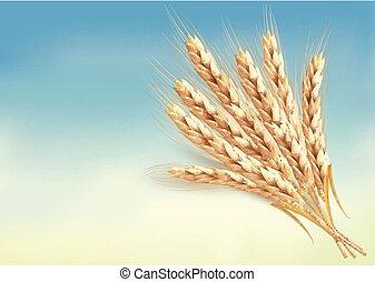 oreilles, wheat.