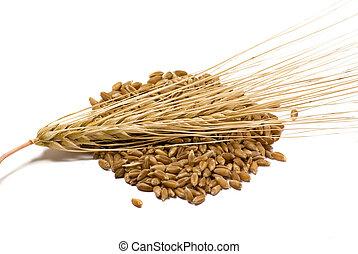 oreja, cebada, granos