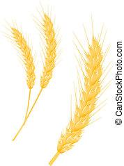oreja, trigo