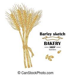 orejas, de, barley., mano, dibujado, cereal, set.,...