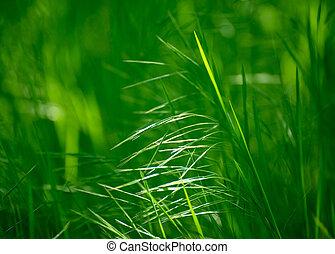 orejas, de, el, fresco, hierba verde