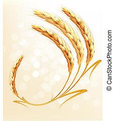 orejas, de, trigo, fondo., vector.