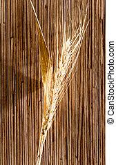 orejas, de, trigo, ., macro