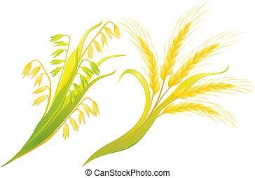orejas, trigo, avenas