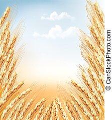 orejas, trigo, fondo.