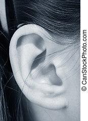 orelha