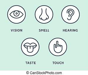 orelha, sentidos, olho, ícones, mão, vetorial, ouvindo, gosto, jogo, cinco, human, toque, boca, linha, cheiro, tongue., visão, nariz