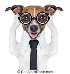 orelhas covering, cão