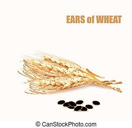 orelhas, illustration., vetorial, wheat.