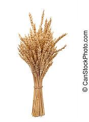 orelhas, trigo